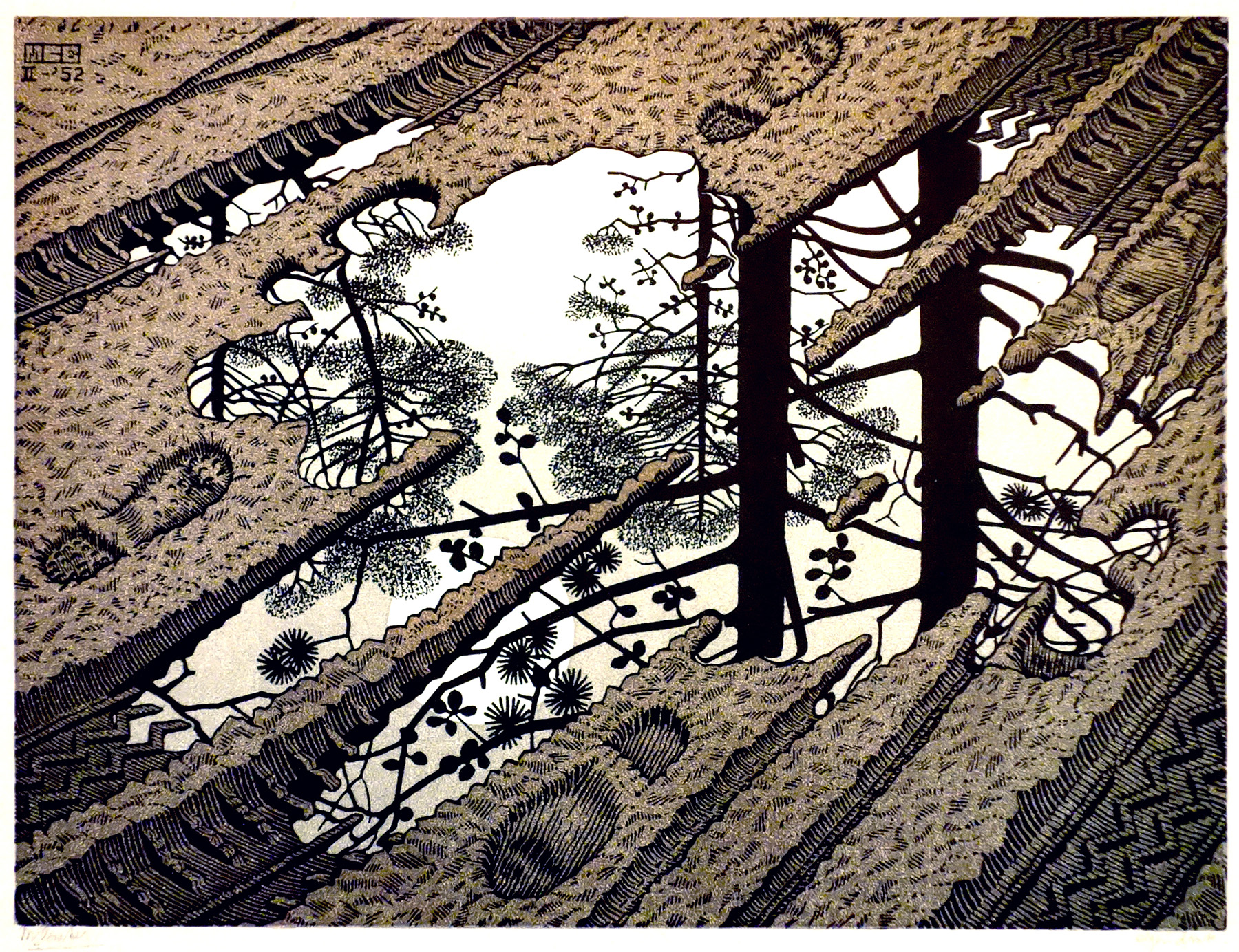 Puddle / modderplas- Maurits Cornelis Escher
