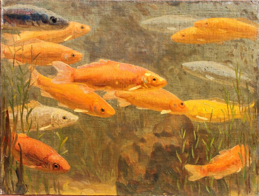 Een school goudvissen- Gerrit Willem Dijsselhof