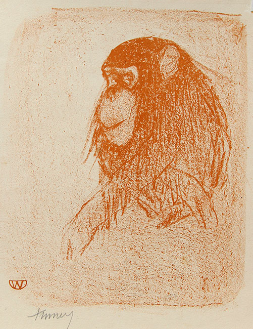 Chimpansee- Kees Timmer